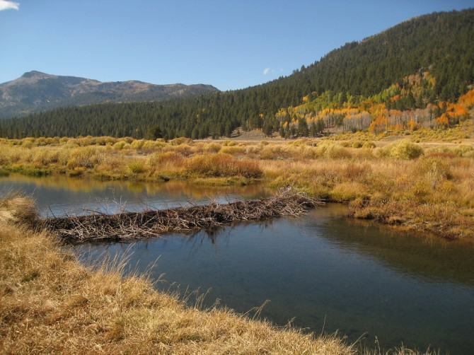 Fall colors and beaver dam, Hope Valley, California