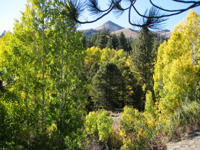 Fall color in Hope Valley, Highway 88